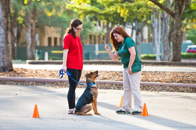 training-a-dog private class miami