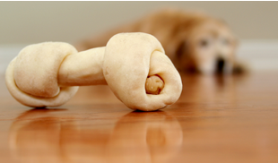 Teaching Dogs to Chew Bones Together – Positive DogTraining in Miami Florida