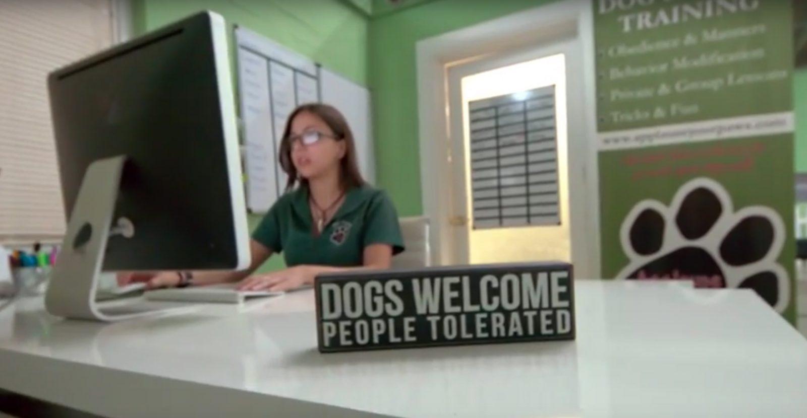 puppytrainingmiami.com