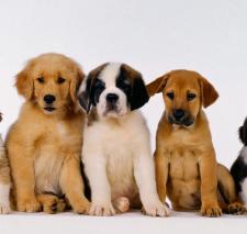 miami group class puppy kindergarten