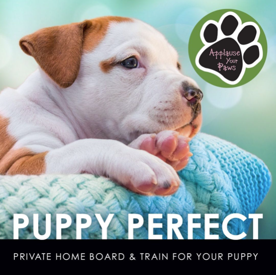 Puppy Training: We Got You